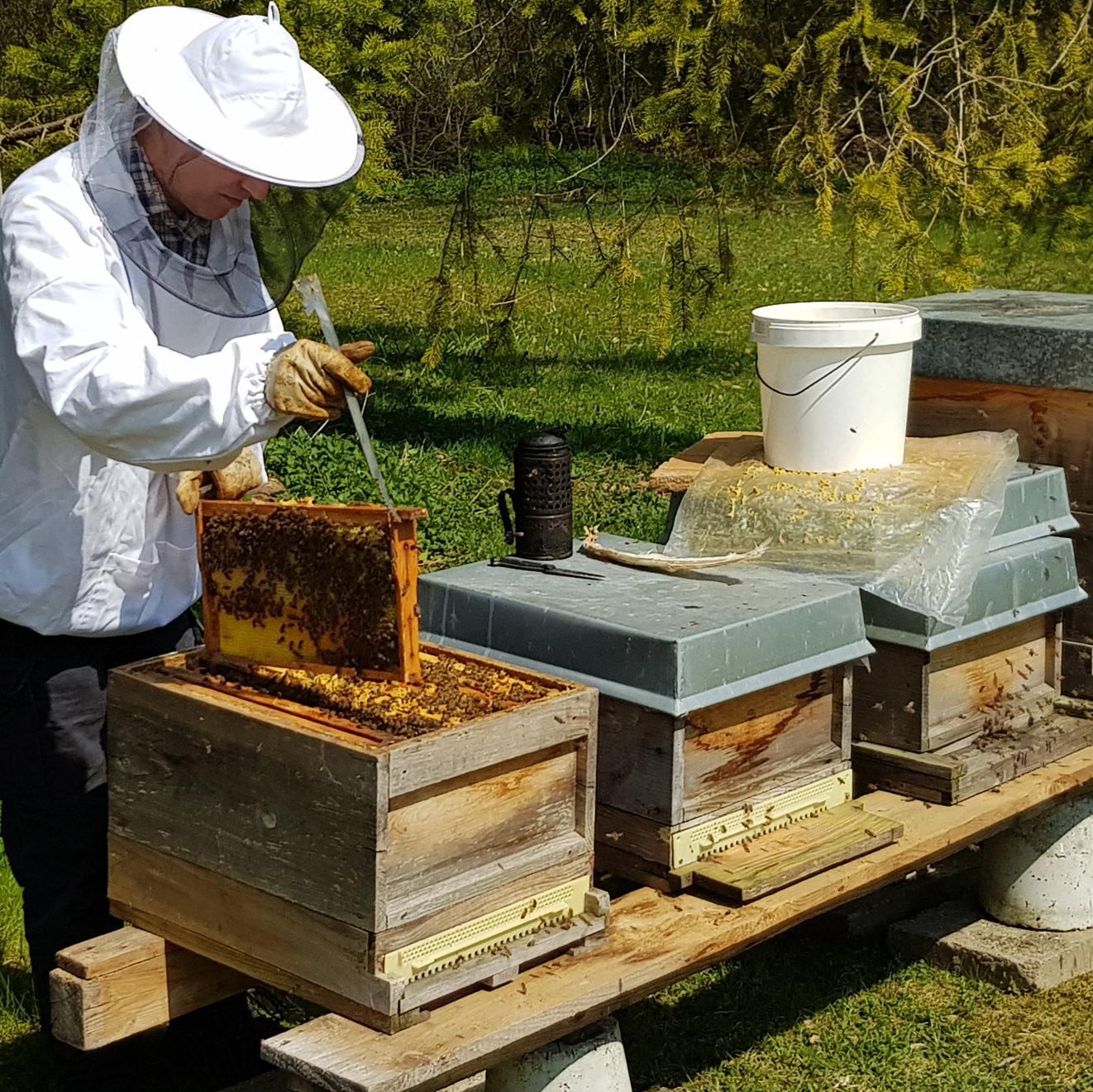 """Bienenpatenschaft """"Bienen erleben"""""""