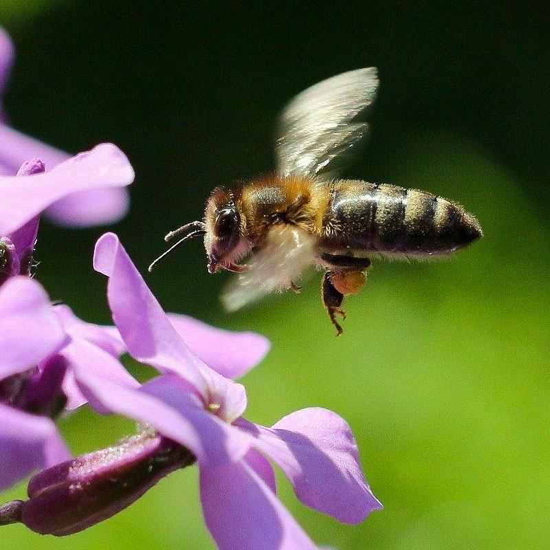 Bienenpatenschaft für eigenen Honig