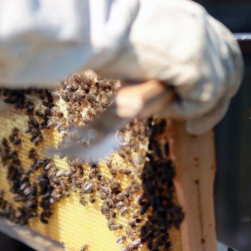 Bienenpatenschaften für Firmen