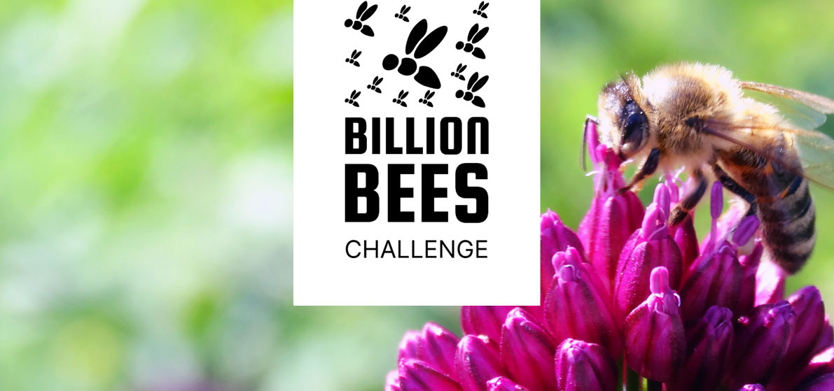 Billion Bees Challenge