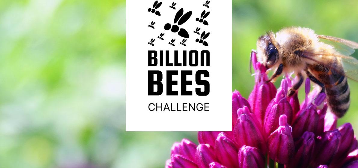 Billion Bees Challenge