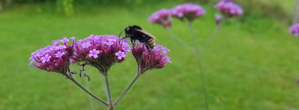 Heike (Billion Bees)
