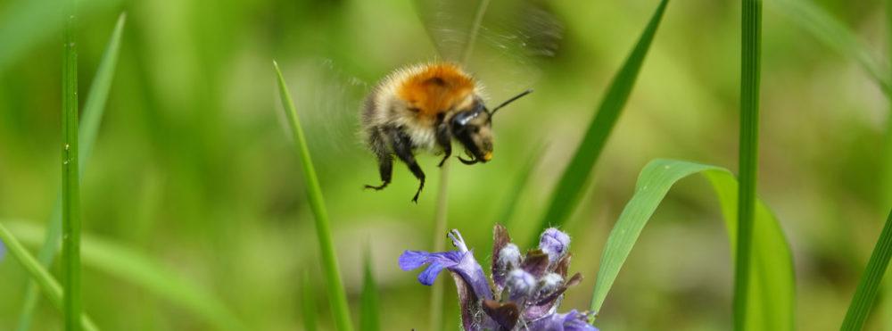 Markus (Billion Bees)